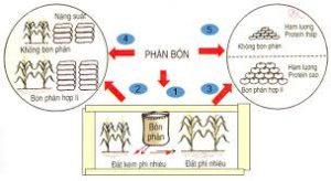 Tác dụng của phân NPK đối với cây trồng