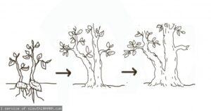 Sự hình thành dáng cây trong tự nhiên – Phần 3